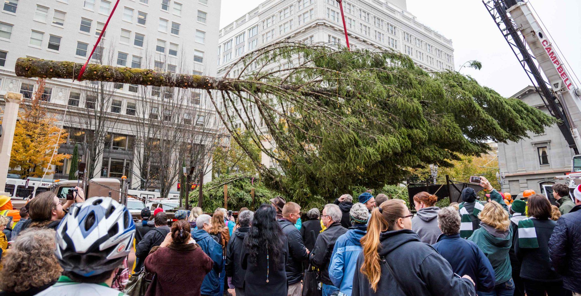 Stimson Lumber Tree Arrival