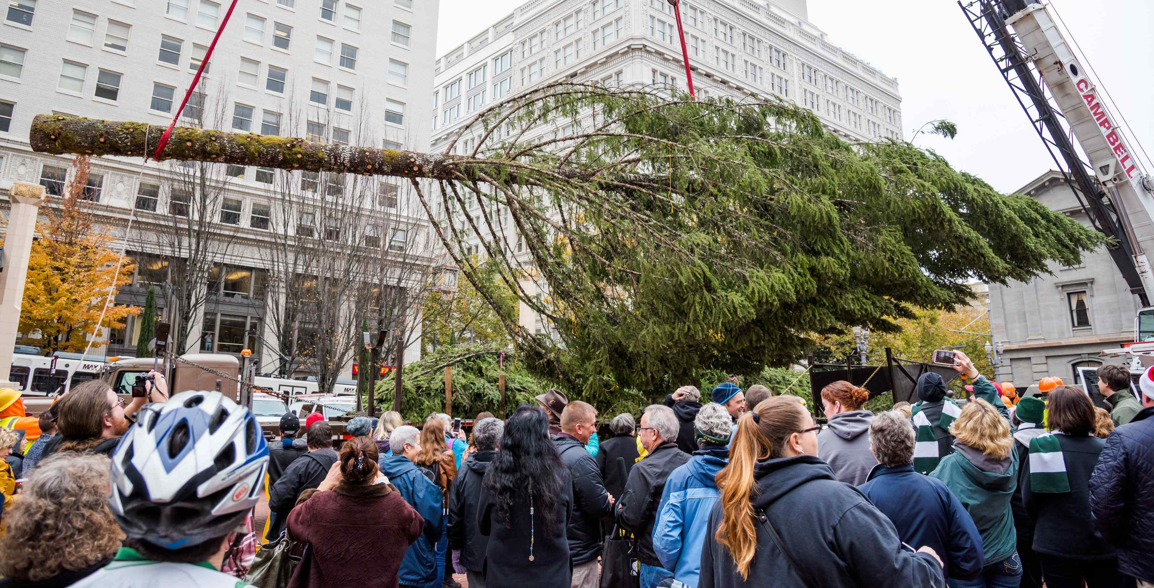 The City of Portland's Tree is Arriving At Noon on Friday, November 15th!